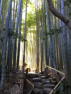 15 Bamboo Grove