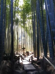 16 Bamboo Grove II